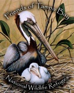 Friends of the Tampa Bay National Wildlife Refuges